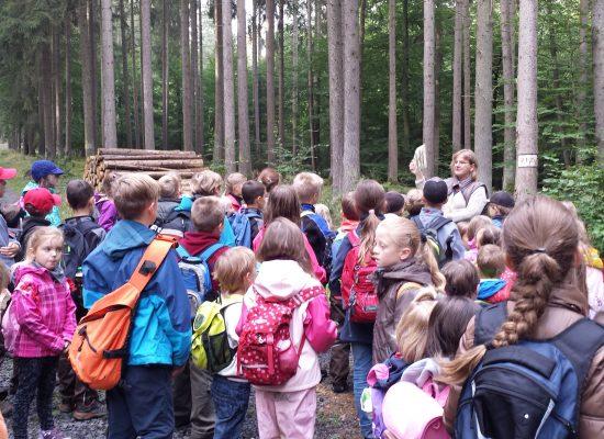 Wir lernen die Waldregeln